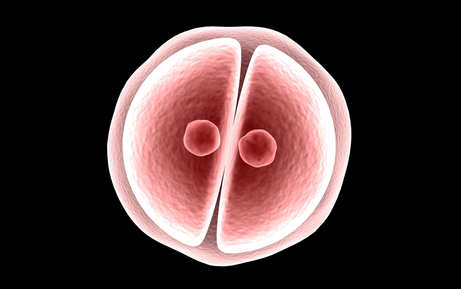 Understanding Embryo Grading: Why It's Important for Successful IVF